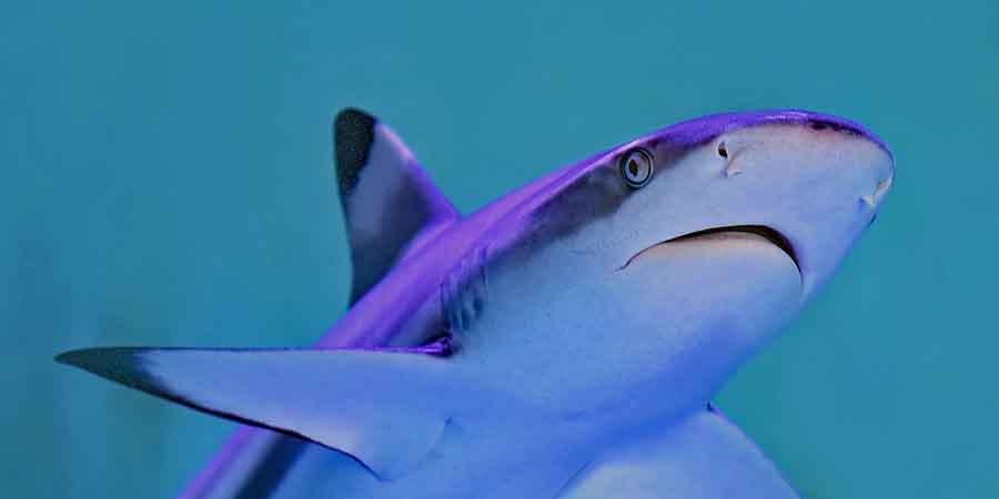 Stop the Killing of Sharks - 365give