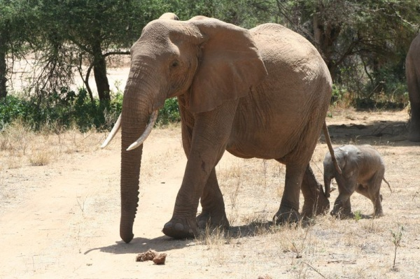 Give just $1.00 and help save the elephants from extinction