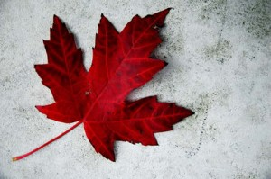 Top 5 Ways to Give back to your country on Canada Day