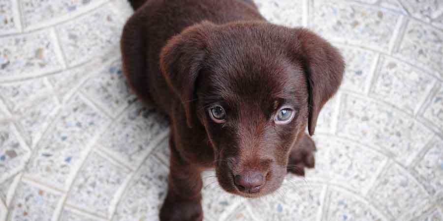 Puppy Mills Bite - 365give