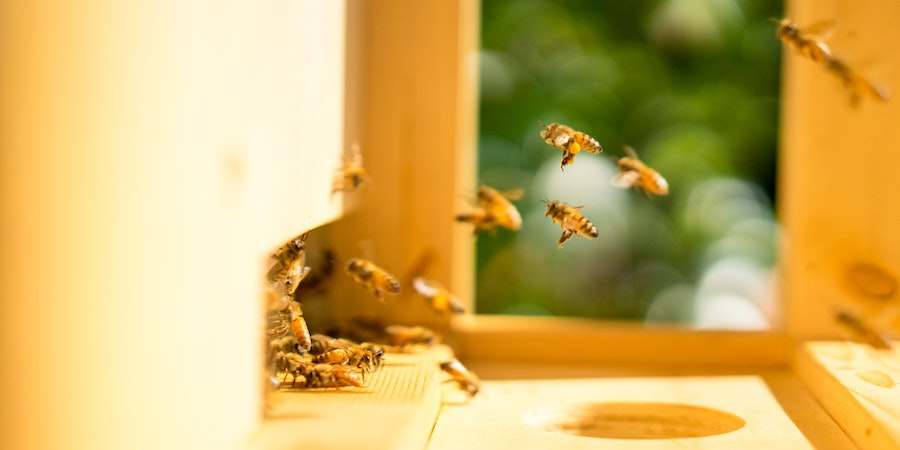 Bees Give To The Planet